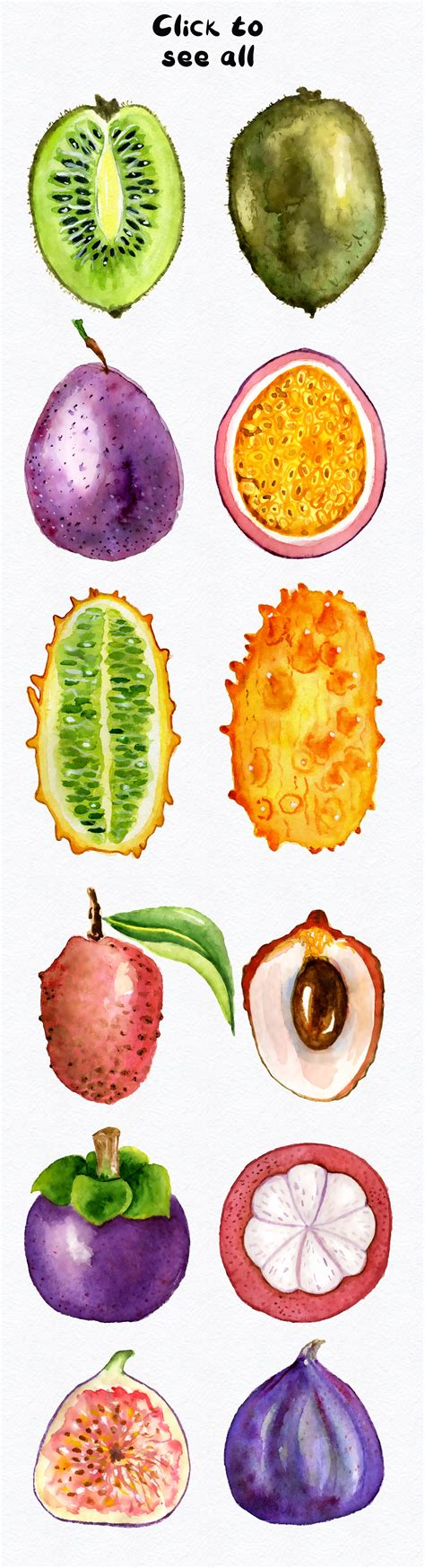 watercolor fruits clipart by digitalartsi thehungryjpegcom watercolor tropical fruits clipart by evgeniiasart