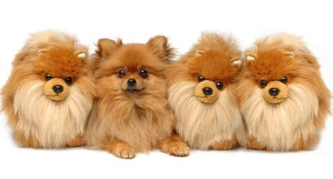puppy that looks like a teddy teddy breeds the pups that look like cuddly toys