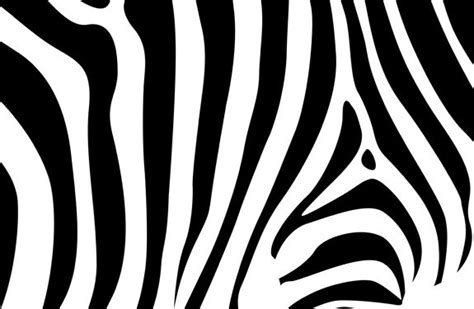 Zebra Stripe Vector Pattern | zebra stripes pattern