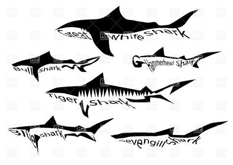 species of shark silhouette of sharks isolated on white