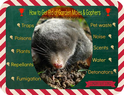 how to get rid of moles in my backyard garden moles moles are good for your garden a new study