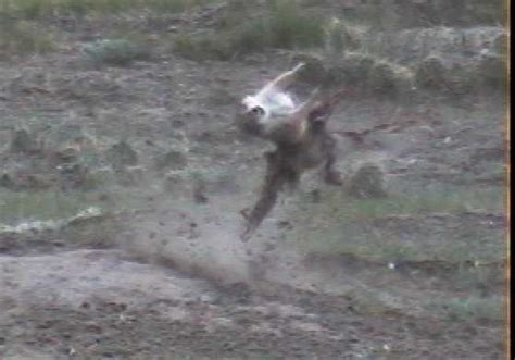 prairie hunt prairie