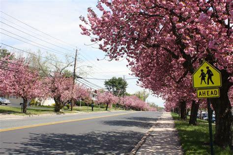 tree store cherry hill nj plumbing heating and drain cleaning services in cherry