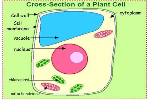 cells  voss science
