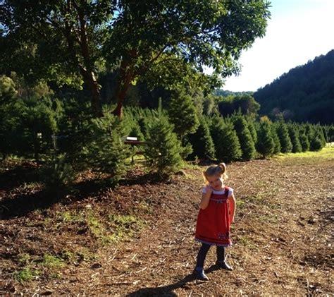 castro valley christmas tree farm castro valley ca