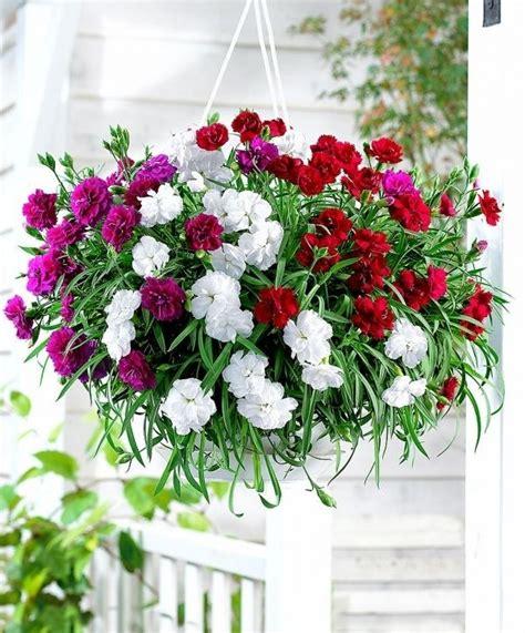 piante da vaso perenni fiori da vaso fiorista fiori per vaso