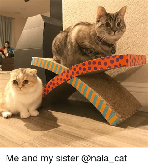 me and my cat me and my sister meme on sizzle