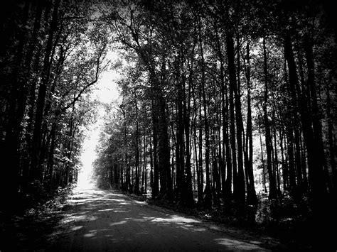 kostenlose foto baum natur wald ast licht stra 223 e sonnenlicht blatt blume gr 252 n kurve kostenlose foto baum natur wald horizont sumpf ast licht schwarz und wei 223 stra 223 e