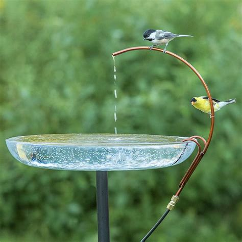 universal dripper birds prefer moving water the
