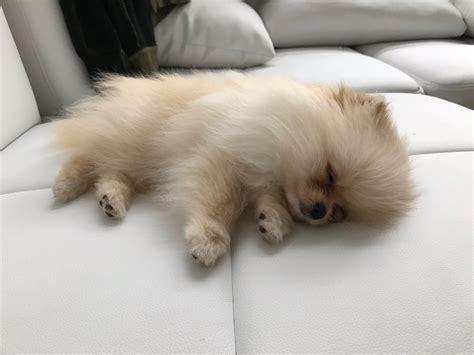 rclbeauty101 puppy neyo levin neyo levin