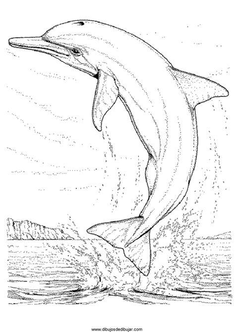imagenes para dibujar reales dolphins coloring 043 dibujos de dibujardibujos de dibujar