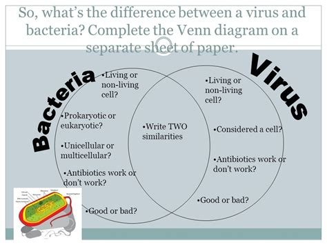 venn diagram of virus and bacteria get out brainpop sheet bacteria go notes ppt