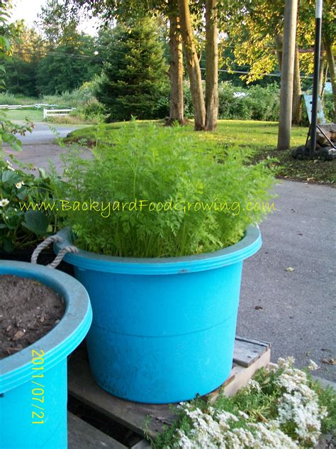 Planter Soil by How To Grow Carrots In Containers Backyard Food Growing