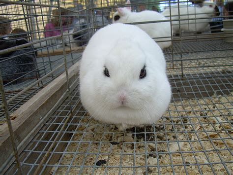 Ugliest Color In The World ugly rabbit front view flickr photo sharing