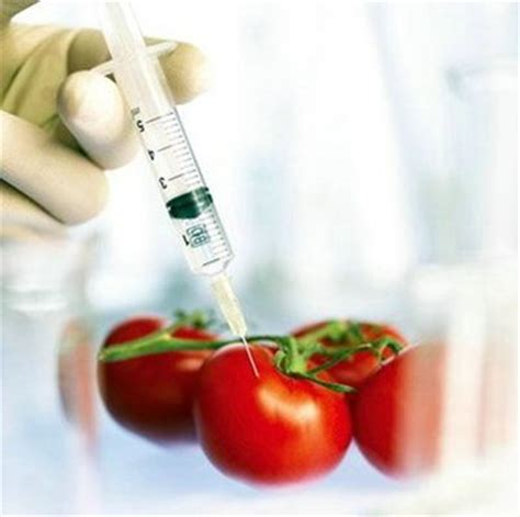 alimenti fanno ingrossare il x tabella additivi chimici nocivi in cucina decreto 209 309