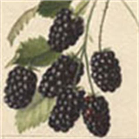 themes of blackberry picking blackberry picking