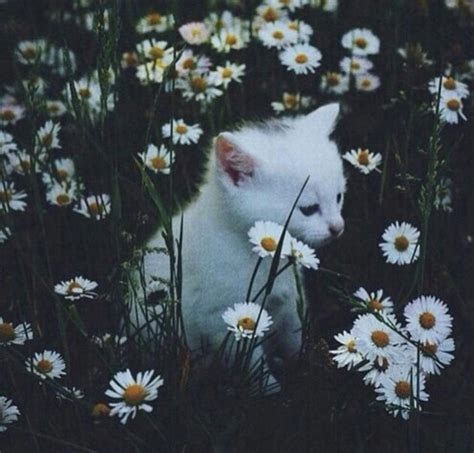 imagenes hipster de flores aesthetic cat field flower flowers image 4374851 by