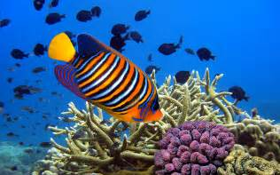 Fish hd most colorful tropical freshwater fish hd colorful fish