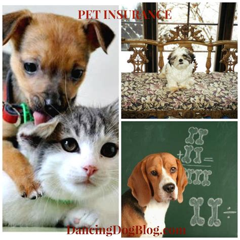 pet insurance for dogs pet insurance what s best for your pet