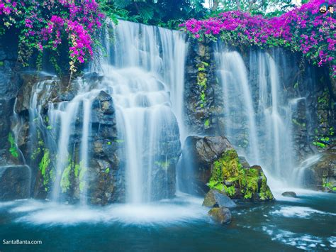 beautiful waterfalls with flowers beautiful waterfalls with flowers quotes
