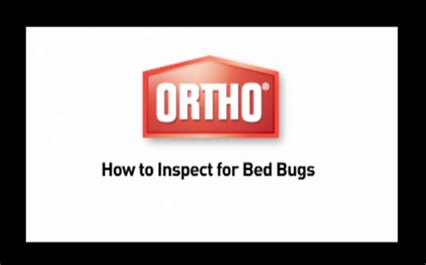 how to inspect for bed bugs a growing pest problem bed bugs are creepy crawly and