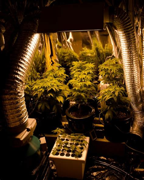 co2 grow room how to grow knowing the required temperature water and co2 learn growing marijuana