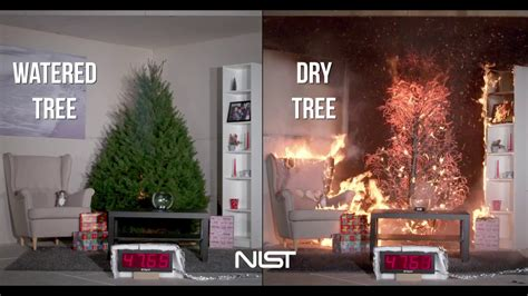this is why you should water your christmas tree daily