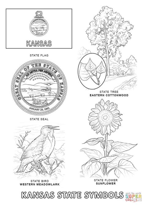 Kansas State Symbols Coloring Page Free Printable Kc Colour Pages