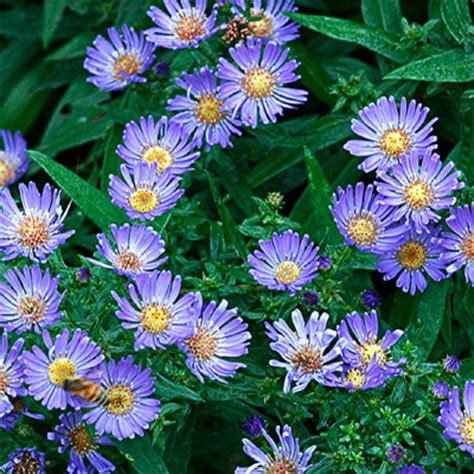 Summer Garden Plants by 9 Best Summer Flowers Sunset