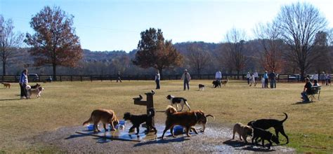 dogs nashville parks in brentwood franklin and nashville tn the brentwood tn guide