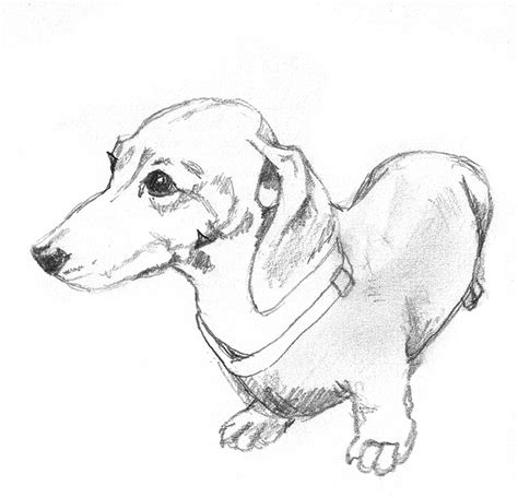 puppy sketches all kinds of animal clipart