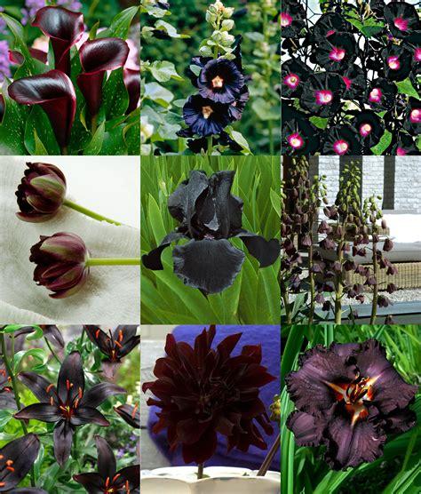 colore fiori fiori neri tulipani e altri fiori dai colori