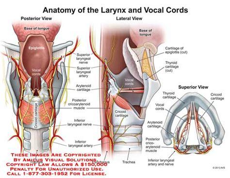 Tissue Holder by Larynx Anatomy Exhibits