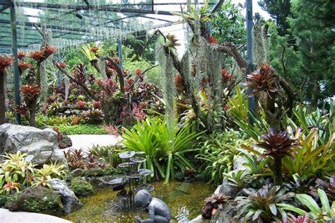plants in singapore botanic gardens more tropical plants picture of singapore botanic gardens singapore tripadvisor