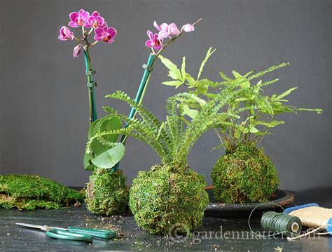 kokedama how to create a moss ball string garden