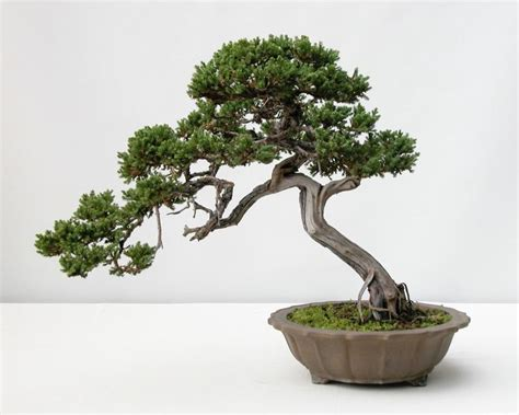66 best images about bonsai drawing on bonsai trees tree drawings and dibujo 17 best images about art tree references on trees bonsai trees and how to draw trees