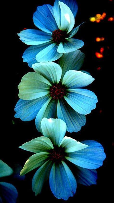 printable blue flowers fire flowers print by steve mckinzie