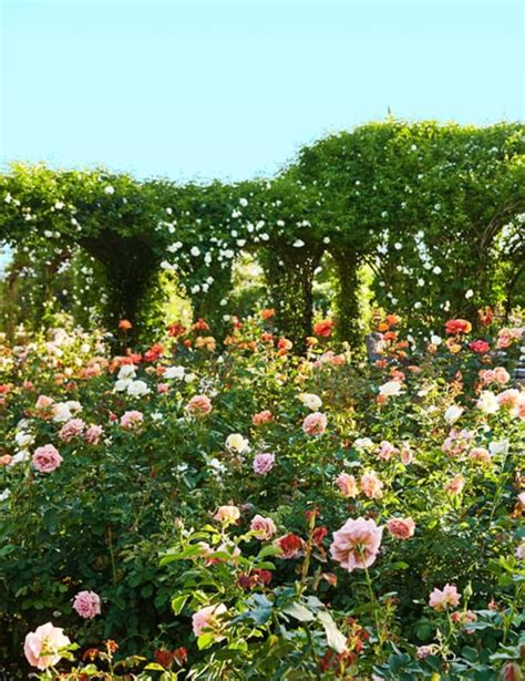oprah winfreys rose garden  spiritual oasis