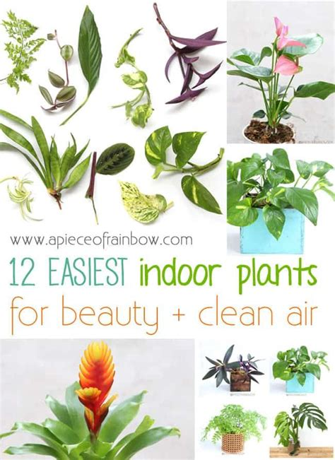 easy plants to grow indoors 25 best ideas about easy house plants on pinterest