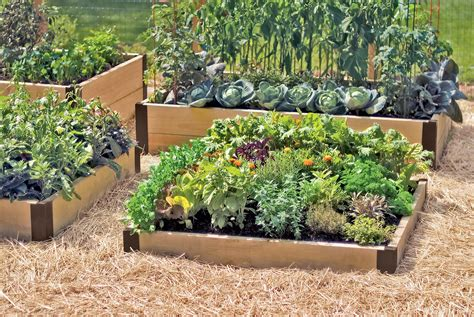 raised veg beds growing vegetable gardens raised beds
