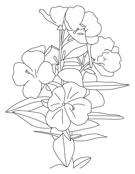yellow buttercup coloring pages