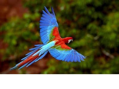 tropical amazon rainforest screen   flowvella