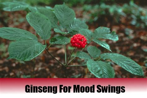 home remedies for mood swings best medicine for mood swings 28 images home remedies