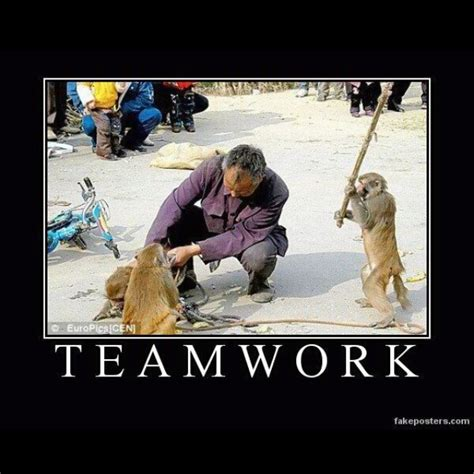 Teamwork Meme - funny animal teamwork meme pictures to pin on pinterest