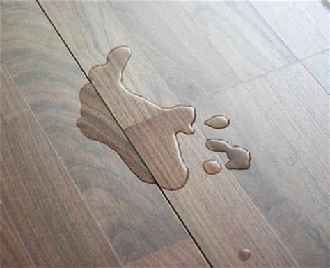 What Causes Floors To Creak by Your Floors Are Creaking What Do You Do Discount Flooring