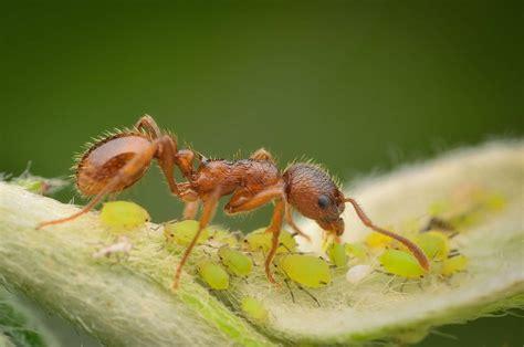hausmittel gegen ameisen im garten 4356 10 hausmittel gegen sch 228 dlinge im garten plantura