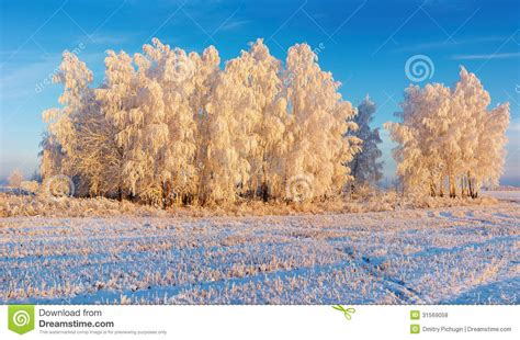 frosty forest royalty free stock winter landscape royalty free stock photos image 31569058