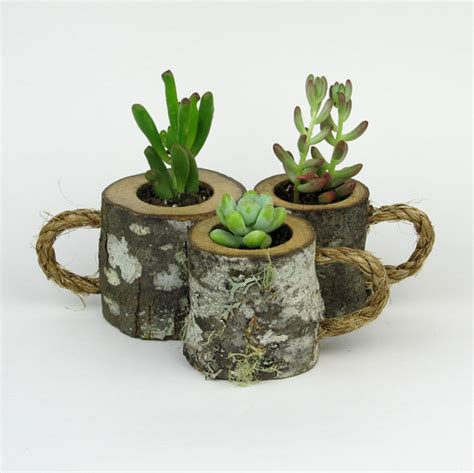 Coffee Mug Planter by 3 Rustic Succulent Planters Coffee Mugs Log Planter Cactus