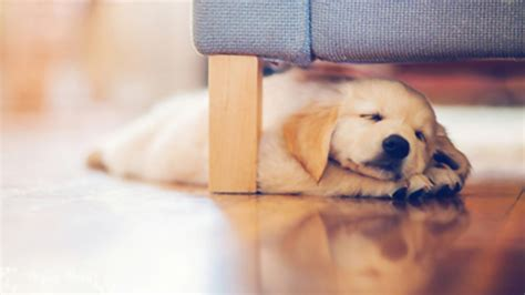 puppy nap sleep wallpaper desktop 10499 wallpaper walldiskpaper