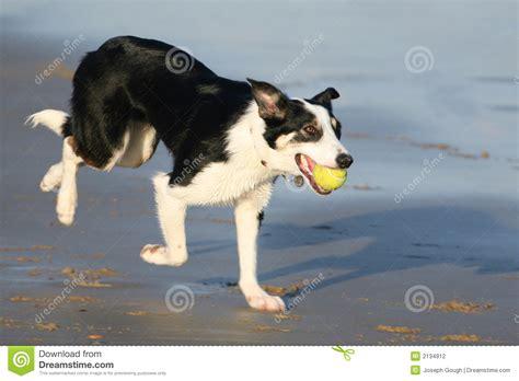 playful dogs playful stock photography image 2134912
